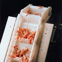 prawn conveyor